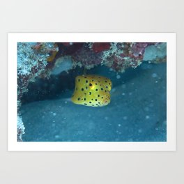 Puffing boxfish Art Print