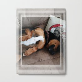 Firo is our family dog. He has a long history for one so young! Metal Print