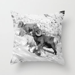 2 Amazing Bighorn Sheep in Black and White by OLena Art for #Society6 Throw Pillow