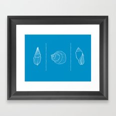 Three Shells #001 Framed Art Print
