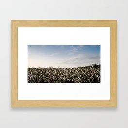 Cotton Field 2 Framed Art Print