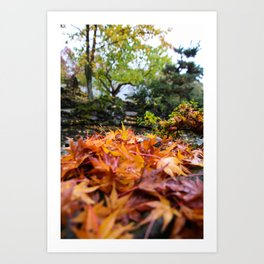 wet autumn Art Print
