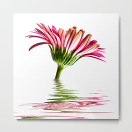 Pink Gerbera Flood 2 Metal Print