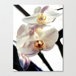 White Orchids Canvas Print