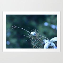Snowy Pine Art Print