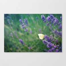 Lavender Butterfly Canvas Print
