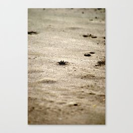 Little Crab at Lahaina III Canvas Print