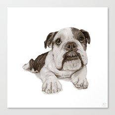 A Bulldog Puppy :: Brindle  Canvas Print