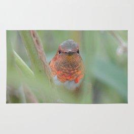 An Allen's Hummingbird Amid Mexican Sage Rug