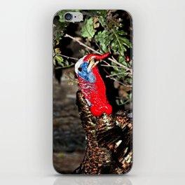 Wild Turkey Close Up iPhone Skin