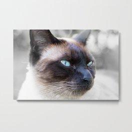 Siam Cat Portrait Metal Print