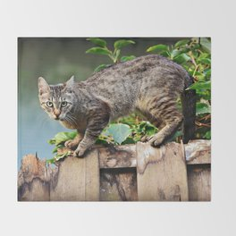 Cat Animal Mackerel Throw Blanket