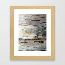 Paper Birch Framed Art Print