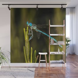 Common Blue Damselfly Wall Mural