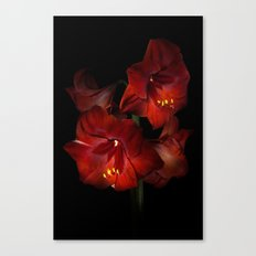 Scarlet Amaryllis Canvas Print