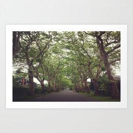 Hamptons Trees Art Print
