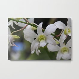 Flirting with Fortune Metal Print