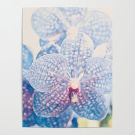 Abstract Orchid Flower Poster