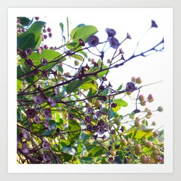Ojai, California: Late Spring Art Print