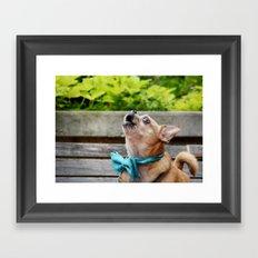 Singing Chihuahua  Framed Art Print