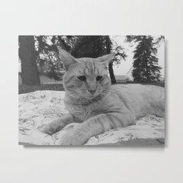 Country Cat Metal Print