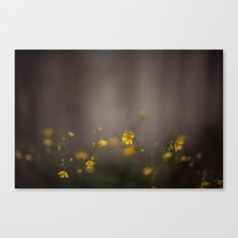 a light in the fog Canvas Print
