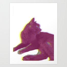 Cat Photography: Willow Art Print