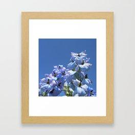 delphinium bloom II Framed Art Print