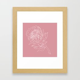 King Protea Outline - Pink and white Framed Art Print