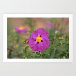Lynda Anne Art Flower Art Print