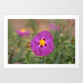 Lynda Anne Art Flower Art Print