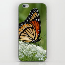 Viceroy Butterfly on Queen Anne's Lace iPhone Skin
