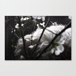 white quince + sheepskin #3 Canvas Print