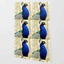 proud peacock Wallpaper