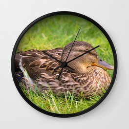 Female Mallard Duck Wall Clock