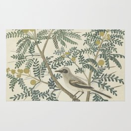 Robert Jacob Gordon - Acacia karroo Hayne or Vachellia karroo - 1777-1786 Rug