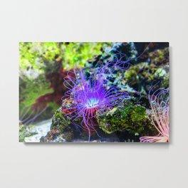 Tropical Undersea Anemone Metal Print