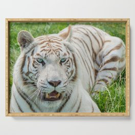 THE BEAUTY OF WHITE TIGERS Serving Tray