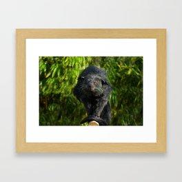 Binturong Looking At You Framed Art Print