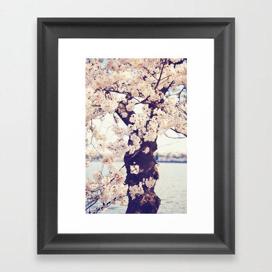 Cherry Tree in bloom Framed Art Print