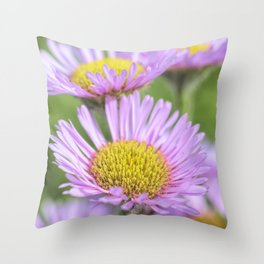 Aster pink daisy flowers in soft focus Throw Pillow
