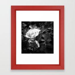 Gradient Rose Framed Art Print