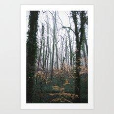 Dahlonega Woods Art Print