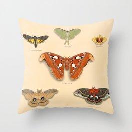 Moths on Display Throw Pillow