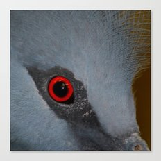 Victoria Crowned Pigeon Eye  Canvas Print