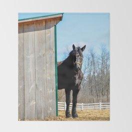 Percheron Horse by Teresa Thompson Throw Blanket