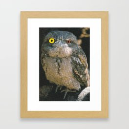 Heterochromia Owl Eyes Collage Framed Art Print