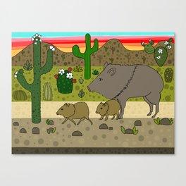 Javelinas in The Sonoran desert Canvas Print