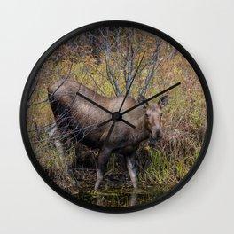 Moose in the Fall, at a Pond, Fairbanks Alaska Wall Clock