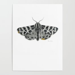 Kintsugi - A Graphite Drawing of a Moth by Brooke Figer Poster